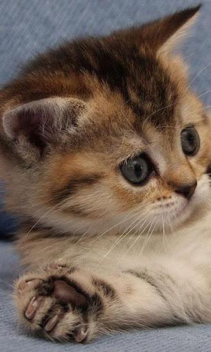 Cute Cat Live Wallpaper: fondos de pantalla hd capturas de pantalla 2