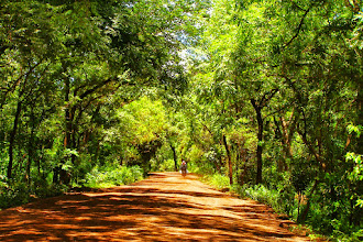 Photo: Tropical forest