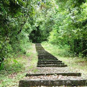 Save Green by Ajit Kumar Majhi - Nature Up Close Trees & Bushes (  )