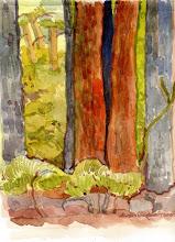 Photo: 2009 Redwoods at Big Basin. Big Basin, CA. Watercolor.