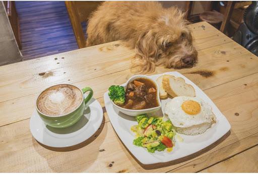 餐廳餐點很棒,店裡的狗狗可愛又會許多才藝,攜旺的老闆及老闆娘讓自己的理念投入在店狗上,讓曾是流浪狗的他們新的希望!