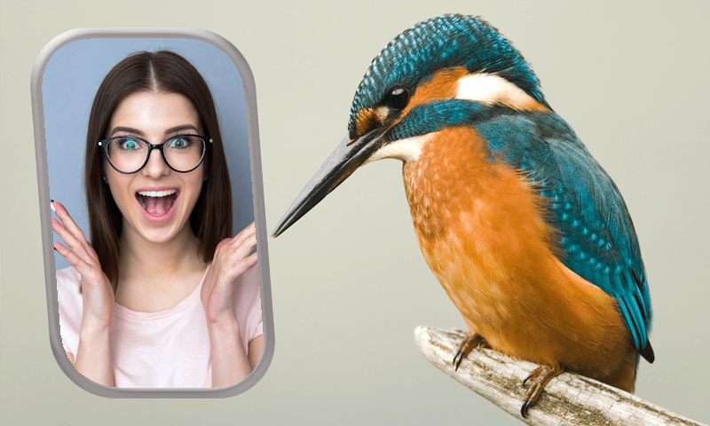 Birds Photo Frames- screenshot