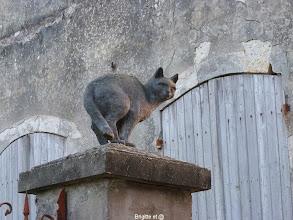 Photo: Un chat avant de quitter La Romieu