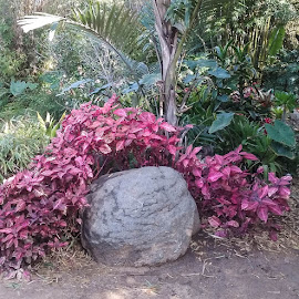 Rock and Red Leaves by Gail Marsella - Nature Up Close Gardens & Produce ( red, green, san diego botanical garden, brown, rock )