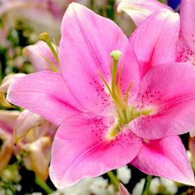 Flower by Philippe Smith-Smith - Flowers Flower Gardens ( fleur, blossom, flora, garden, flower )