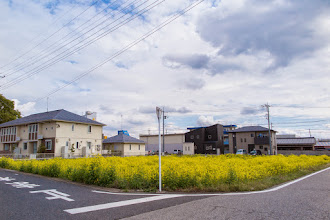 Photo: Filed of vivid yellow rape flowers on a corner field in Ōizumi, Ōra District, Gunma Prefecture. Read more about Oizumi: http://japanvisitor.blogspot.jp/2015/04/oizumibrazil-in-japan.html