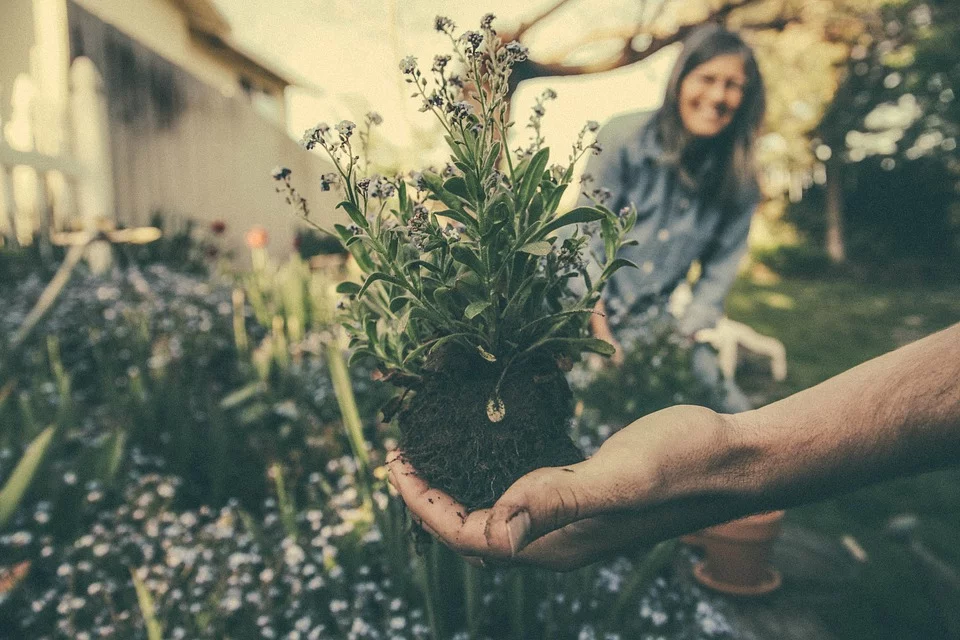 Can You Turn Your Back Garden Into A Goldmine? Here's How