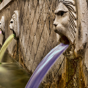 The fountain of life! by Stavros Troullinos - City,  Street & Park  Fountains ( lion, colourful, life, greece, vivid, fountain, rethymno, crete, spili, head )