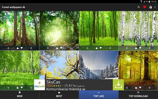 玩個人化App|森林壁纸4K免費|APP試玩