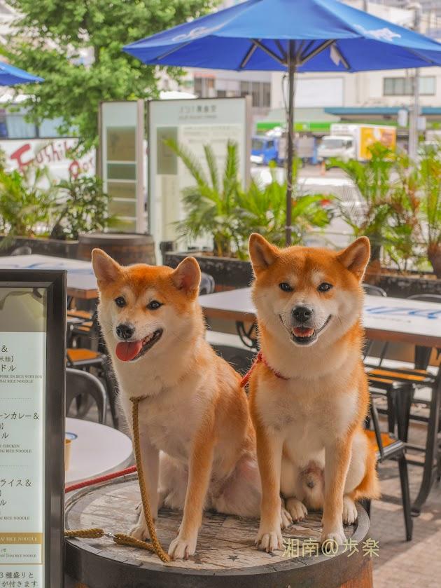 mango tree cafeのわんちゃん達A