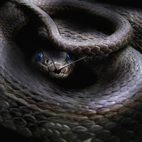 Ssssssss by Zlatko Borenovic - Animals Reptiles