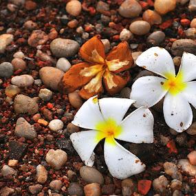 Wonder in nature by Subhasis Ghosh - Flowers Flower Gardens ( nature, wonder, beauty, stones, natural, flower,  )
