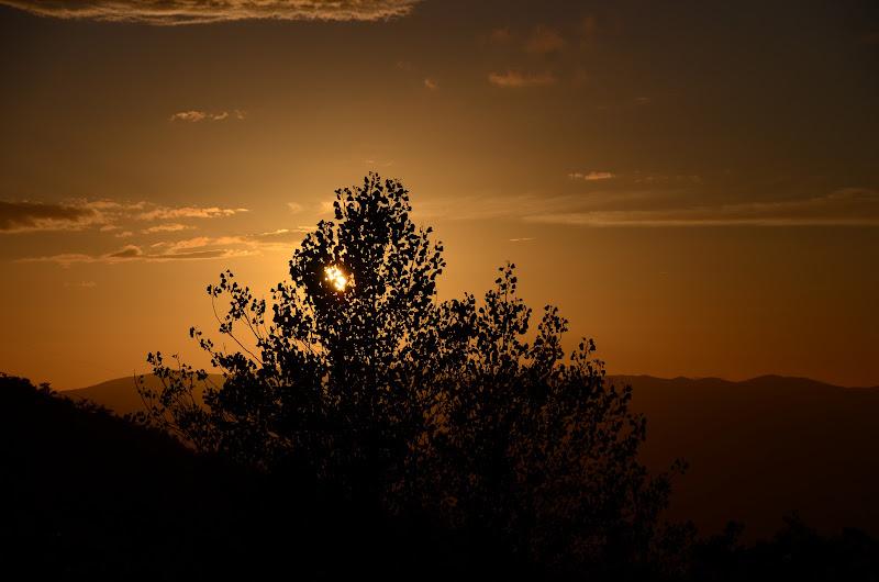 L' albero della vita..... di Gianfranco Legnazzi