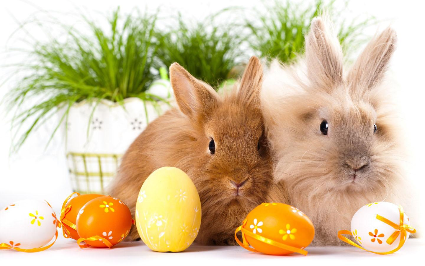 easter bunny wallpaper android apps on google play