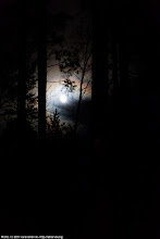 Photo: Moon between the trees, early morning.