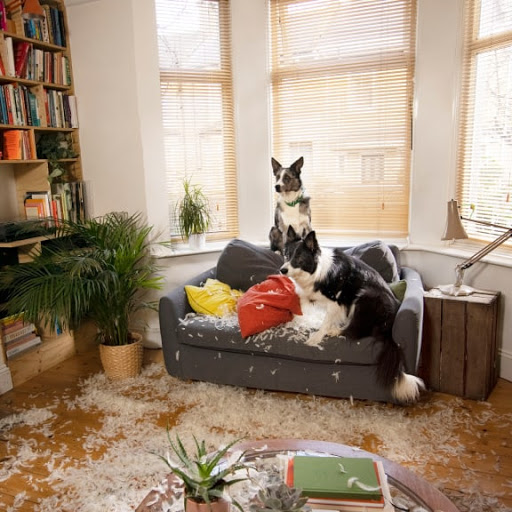 Two dogs are on a couch that's been torn apart with feathers everywhere.