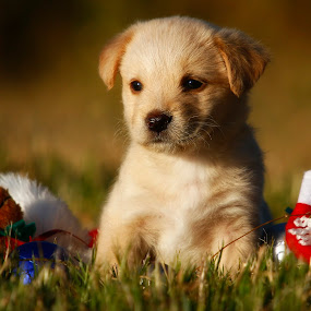 Soaking in the afternoon sun by David Morris - Animals - Dogs Puppies