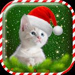 Christmas Cat Wallpaper Icon