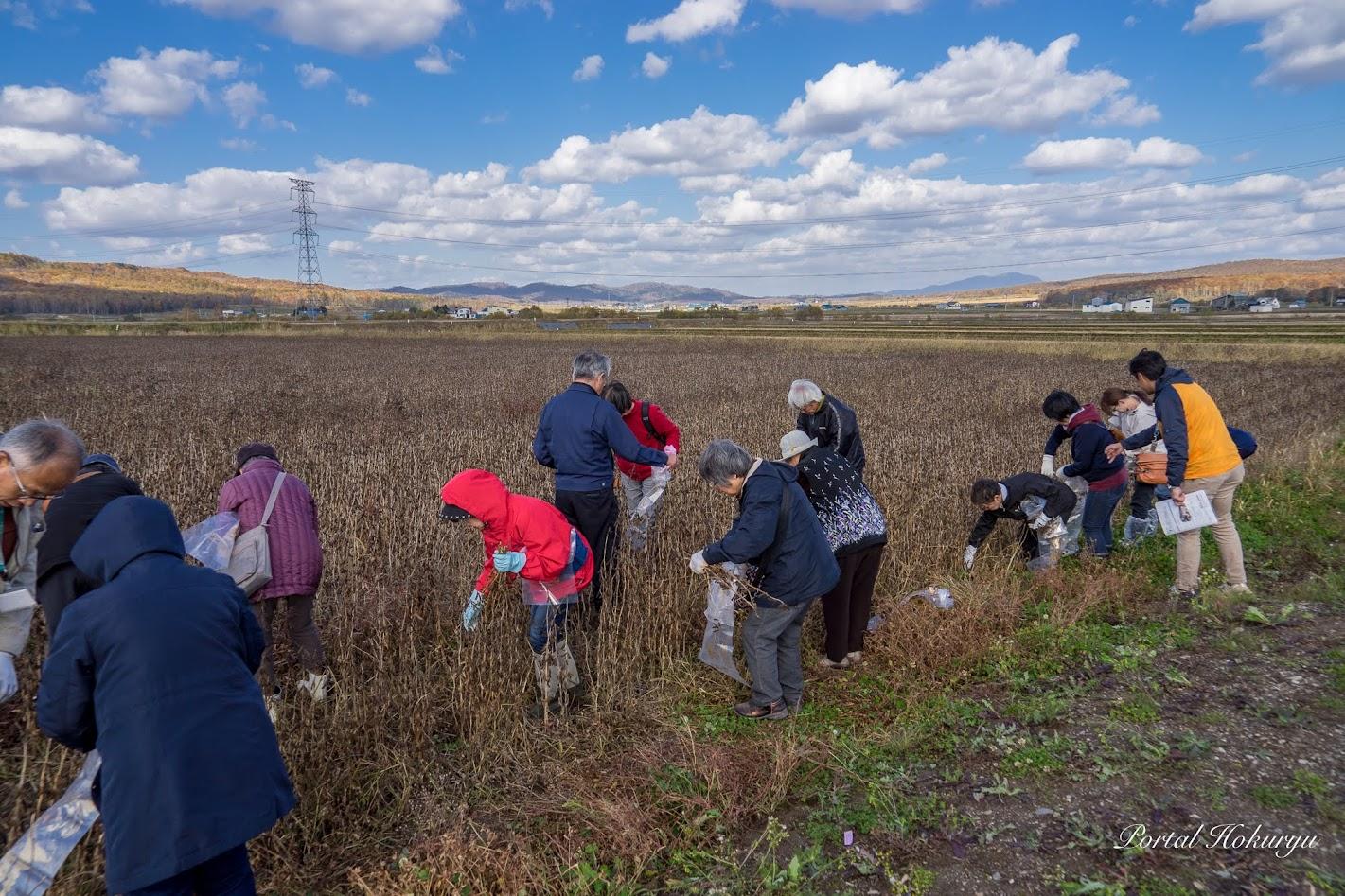 黒千石大豆収穫作業の体験開始