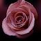 DSC01357a.jpg