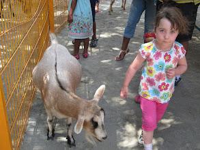 Photo: Petting Zoo at Disney Animal Kingdom