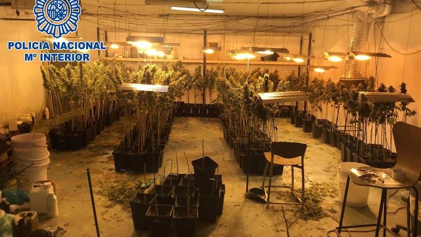 Plantación desmantelada por la Policía Nacional.