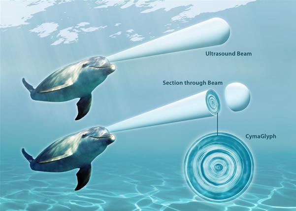 Dolphin_UltrasoundBeam_HR.jpg