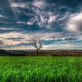 the lonely tree by Marlou Nijpels - Landscapes Mountains & Hills ( couds, mountains, sky, tree, grass, blue, bluesky, belgium, landscape, lonely )