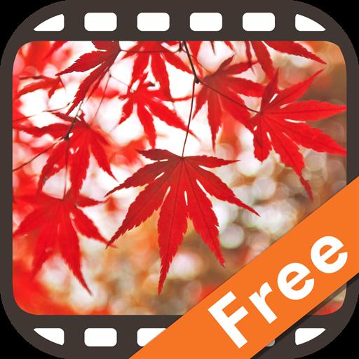 動画でめぐる~にほん秋景色~にほんが誇る美しい紅葉 娛樂 App LOGO-硬是要APP