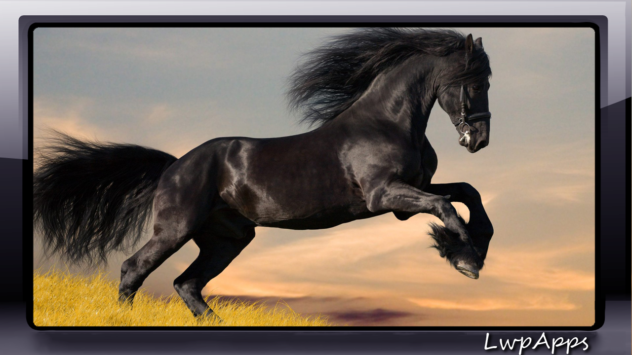 black horse wallpaper - android apps on google play