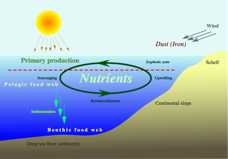 Nutrient-cycle_hg.png