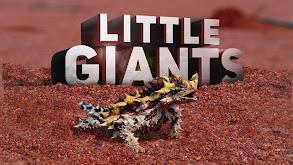 Little Giants thumbnail
