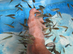 Photo: Year 2 Day 42 -  The Fish Pedicure Tub #3