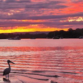 Colours of Noosa by Carolyn Lawson - Landscapes Sunsets & Sunrises (  )
