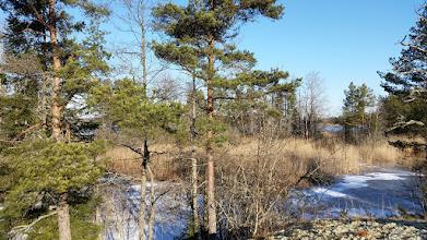 Photo: 013 Yxern, in de Zweedse natuur