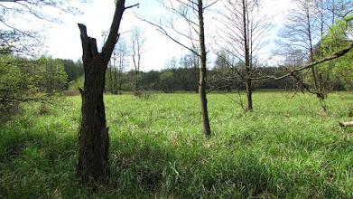 Photo: Mokradła Kampinoskiego Parku Narodowego