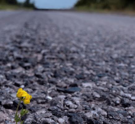 tra l'asfalto... di alessandroaccossato