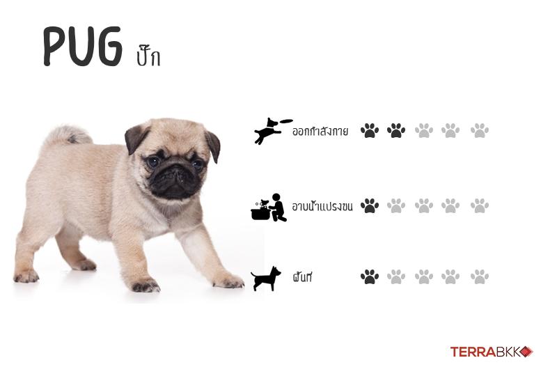 6. ปั๊ก (Pug)