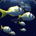Fish Schooling VR download