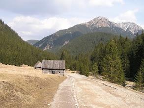 Photo: B3310028 krokusy i nie tylko w Dolinie Chochołowskiej