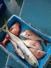 Photo: オガワさんの釣果。