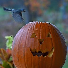 by Steven Liffmann - Public Holidays Halloween