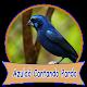 Azulaõ Cantando Pardo Download on Windows