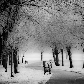 London Frost by Phil Clarkstone - Landscapes Weather
