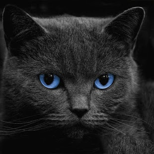 zdarma fotky černé kočičky