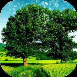 تنزيل 3d Nature Wallpaper Hd 310a لنظام Android مجانا
