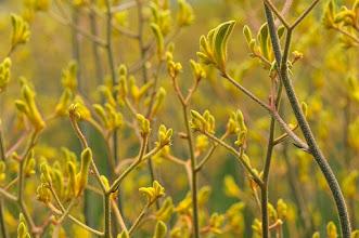 Photo:  #nature  #flowerphotography  #flowers