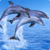 Dolphins 2 live wallpaper