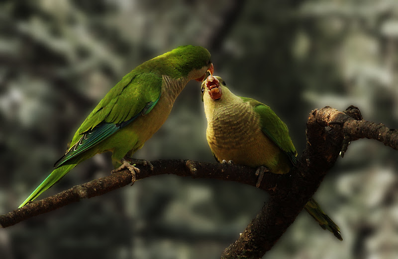 Pappa e Gallo, amore a prima vista di Anida76