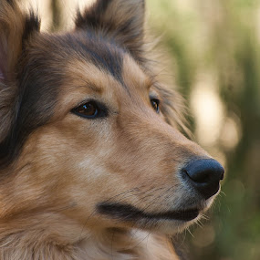 Zylka by Eric Klein - Animals - Dogs Portraits (  )